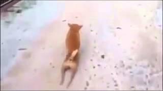 Жалко его собака без ног