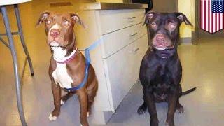 Пропавшую собаку нашли перекрашенной в чёрный цвет!