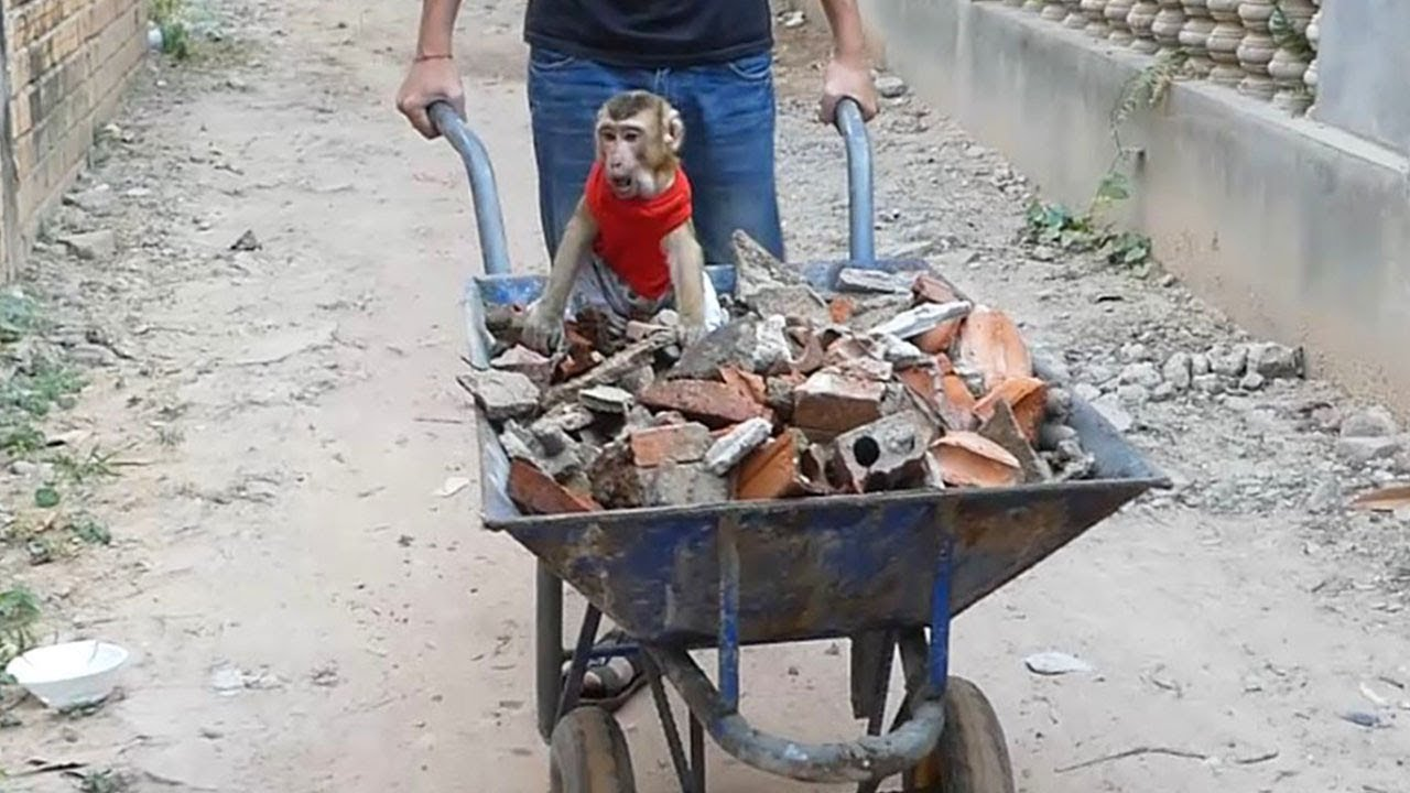 Dodo Happy Outside Ride On Cart To Help Dad Work