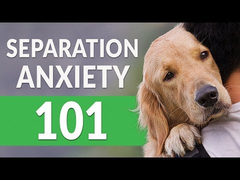 Separation Anxiety In Dogs — How You Can Help