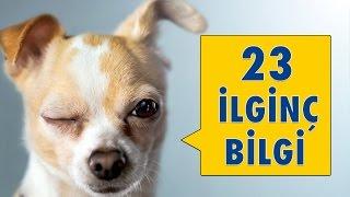Köpeklerle İlgili 23 İlginç Bilgi