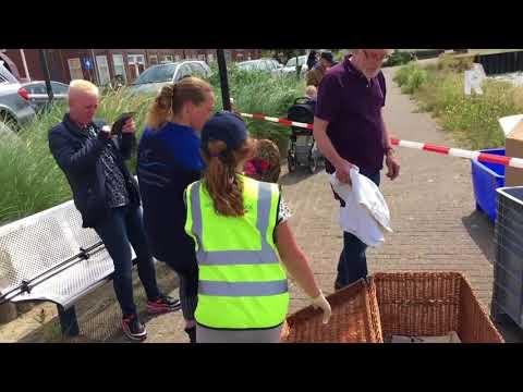 Grote reddingsactie voor zwanen onder de olie: 'Dit is een ramp'