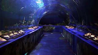 品川区立水族館 Shinagawa Aquarium(Public) Tokyo Japan