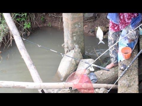catching fish in savannakhet laos , net fishing