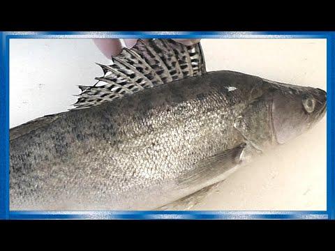 РАЗДЕЛКА СУДАКА НА ФИЛЕ, Всё очень просто, Рыба от  Fisherman Dv. 27 Rus