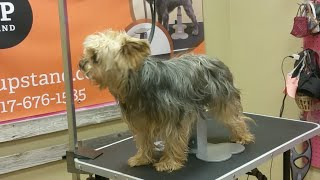 Live Dog Grooming