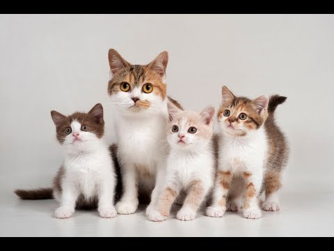 Funny Cat video compilation - adorable cute cats - Laugh time