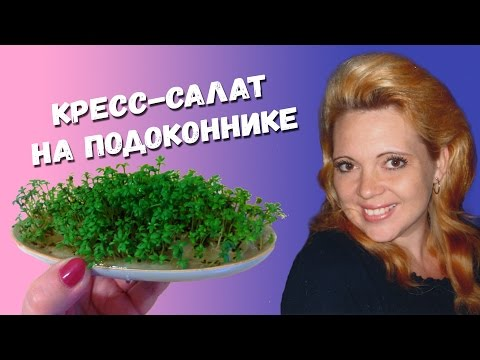 САЛАТЫ - Зелень - Сад и огород - Дикий Дачник