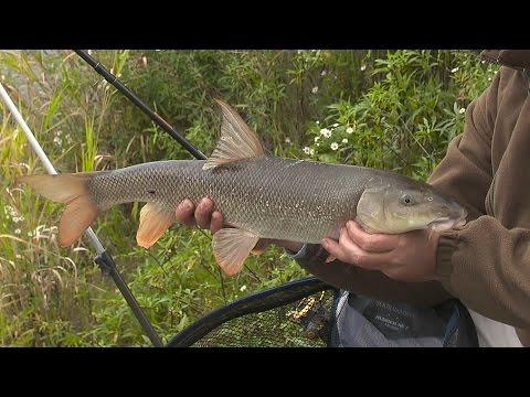 Stovka v proudu 1    (One hundred grams in the stream, pt. 1)