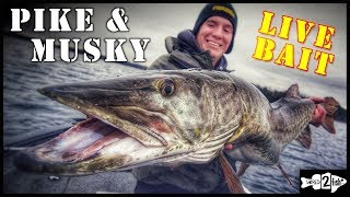Live Bait Rigging Late Fall Pike and Musky