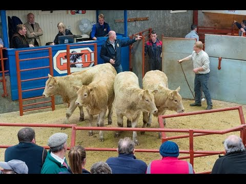 Prize Show & Sale of Hillbred Suckler Calves for The Jacob Thomlinson Cup
