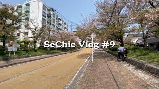 [세식이] 일본회사원의 후쿠오카 일상 브이로그 9 벚꽃…