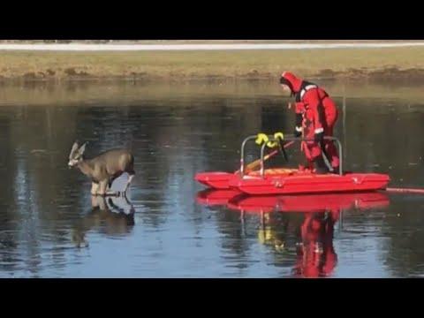 Firefighters Help Deer Stuck on Frozen Pond Get Back to Land