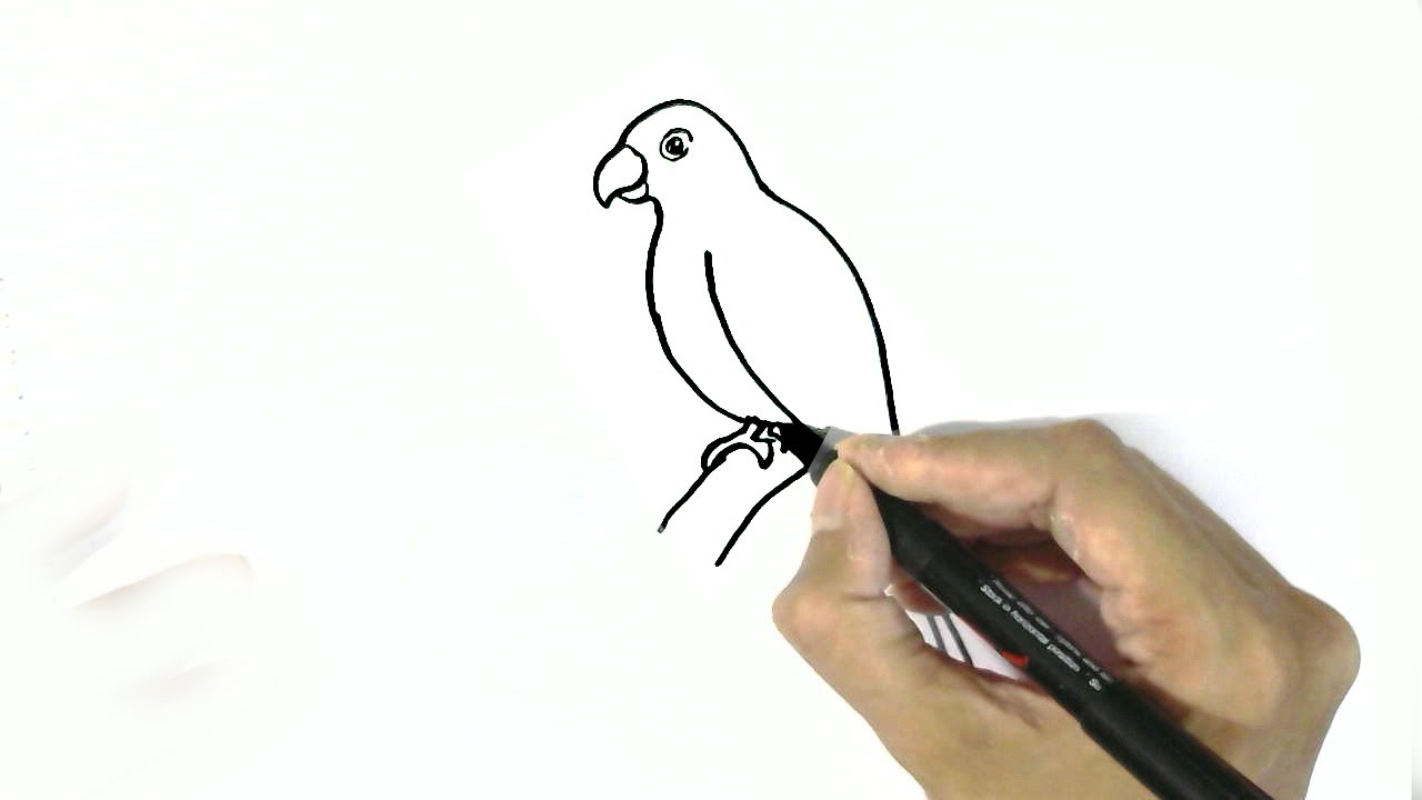 Uncategorized Easy Parrot Drawing how to draw a parrot in easy steps for children beginners youtube beginners