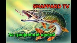 Русская рыбалка 4 За трофейной щукой РОЗЫГРЫШИ НАЖИВОК И БЛЕСЕН
