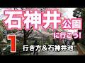 【石神井公園1】行き方と石神井池 の動画、YouTube動画。