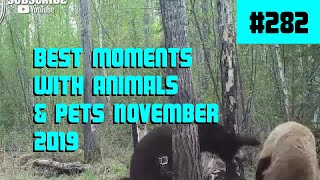 Funny Animals & Pets Coubs November 2019 #282