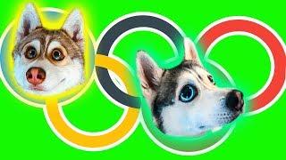 ОЛИМПИЙСКИЕ ХАСЯЧЬИ ИГРЫ (Хаски Бублик) Говорящая собака Mister Booble