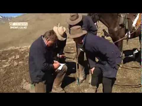 3 News Campbell Live: Spring muster on NZ's largest farm - Molesworth Station