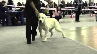 Выставка собак ''Россия 2012'', моно САО