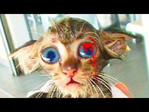 Как определить и вылечить стригущий лишай у кошек в
