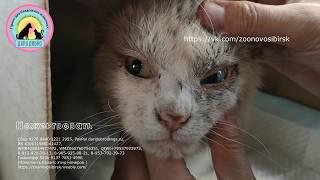 Кот предан хозяевами и выброшен на вокзал потому что болен Жалко До слез