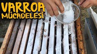 Arılarda Pudra Şekeri İle Varroa Mücadelesi