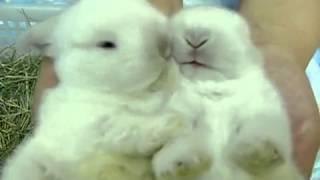 Bunny...rabbit Licking ♥☺☻♥