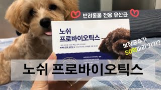 강아지 유산균은 노쉬 프로바이오틱스효과보장 | 반려동물…
