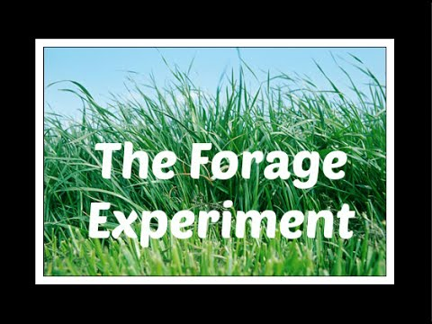 The Forage Experiment | 7 DAY VLOG