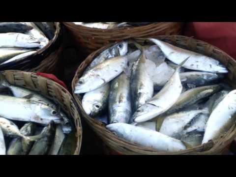 malvan fish market