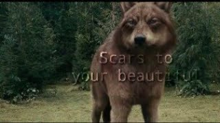 Twilight wolves ~ Scars to your beautiful