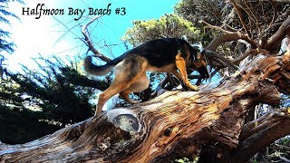 Bent Trees due to Time & Coastal Winds - German Shepherd Climbing Tree at the Beach Part 3 of 4