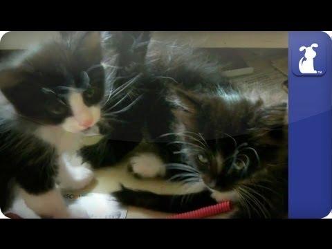 4 Cute Kittens Sleeping in a Drawer