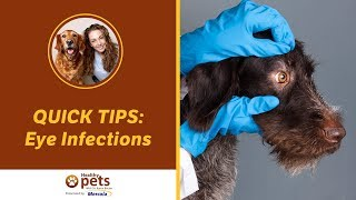 Eye Infections QUICK TIPS!