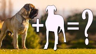 9 unbelievably Cute English Mastiff Cross Breeds / English Mastiff Mixes