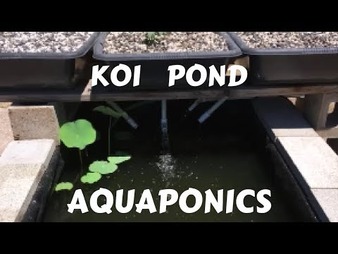 Koi Pond Aquaponics with Media Bed Filtration