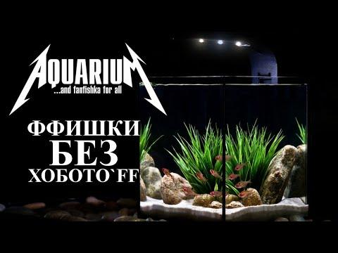 Вопрос: Какие рыбки лучше всего живут в аквариуме?