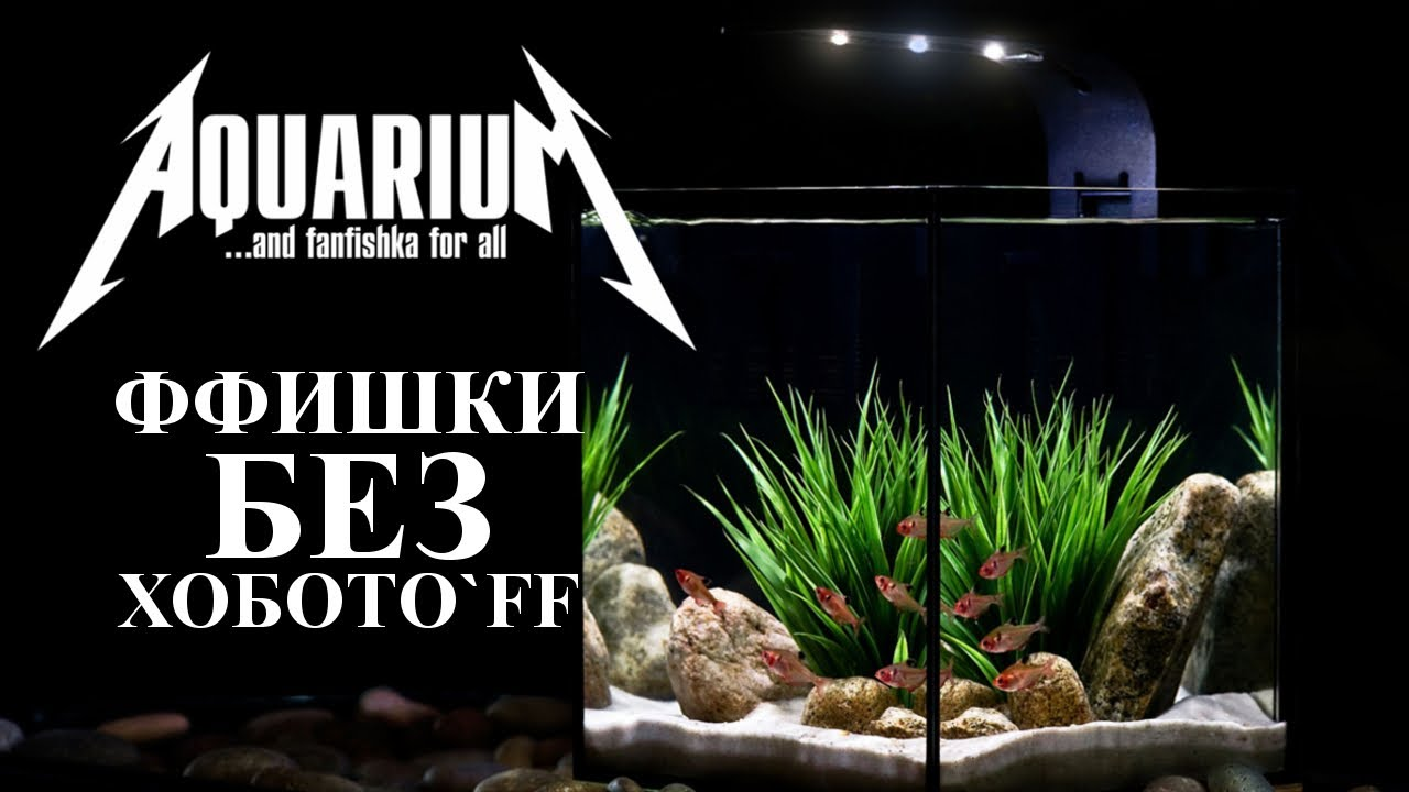 ТОП самых неприхотливых аквариумных рыбок для начинающих. Рубим правду-матку!