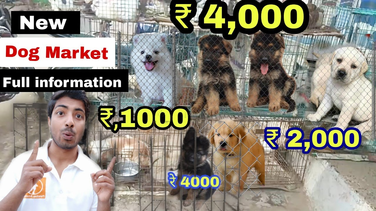 Dog Market All Breed Information Youtube