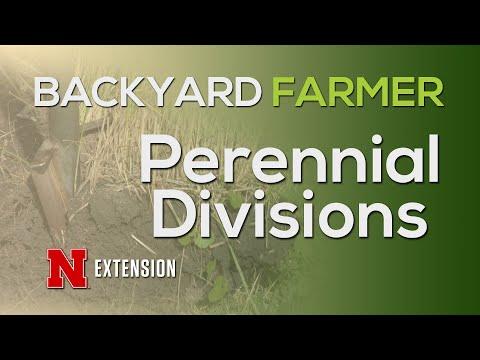 Perennial Divisions