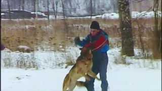 """Диалоги о животных-1994. Фрагмент """"Немецкая овчарка"""""""