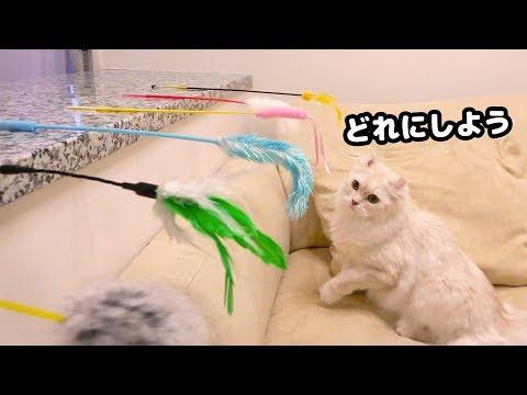 猫じゃらし総選挙で予想外な結果に!?