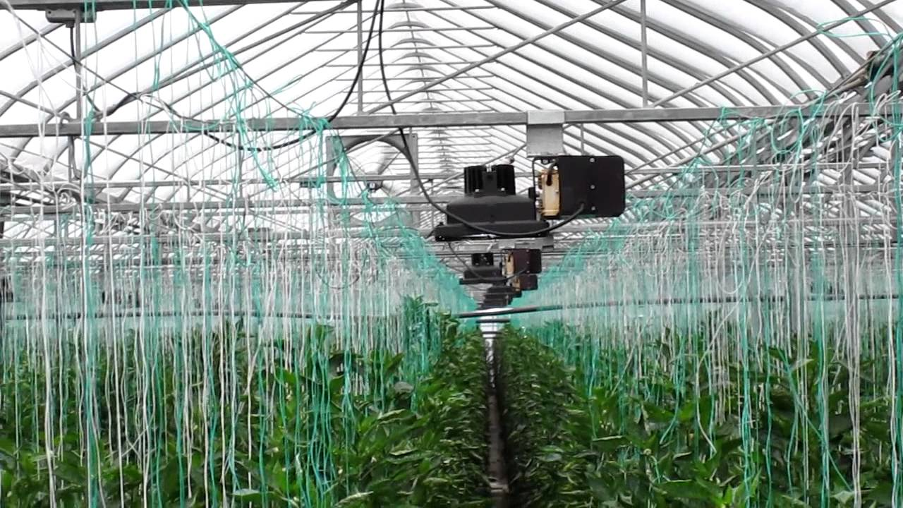 Plasma Grow Lighting In Commercial Greenhouse