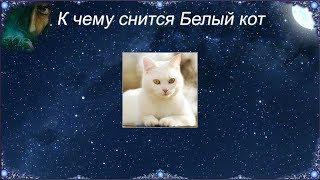 К чему снится Белый кот (Сонник)