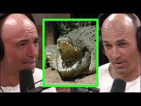 Joe Rogan Kelly Slater Freak Out About Crocodiles Youtube