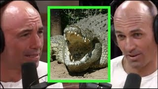 Joe Rogan & Kelly Slater Freak Out About Crocodiles