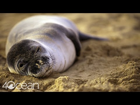 4ocean Partners with The Marine Mammal Center