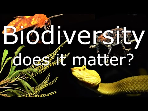 Does Biodiversity Matter? What is it and should Conservation be so Focused on it?