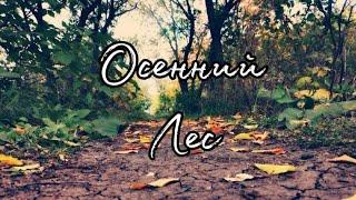 Осенний лесAutumn forest